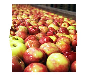 Branche Nahrungsmittel Materialflusssysteme Stanztechnologie Rollen Automation Baust Gruppe